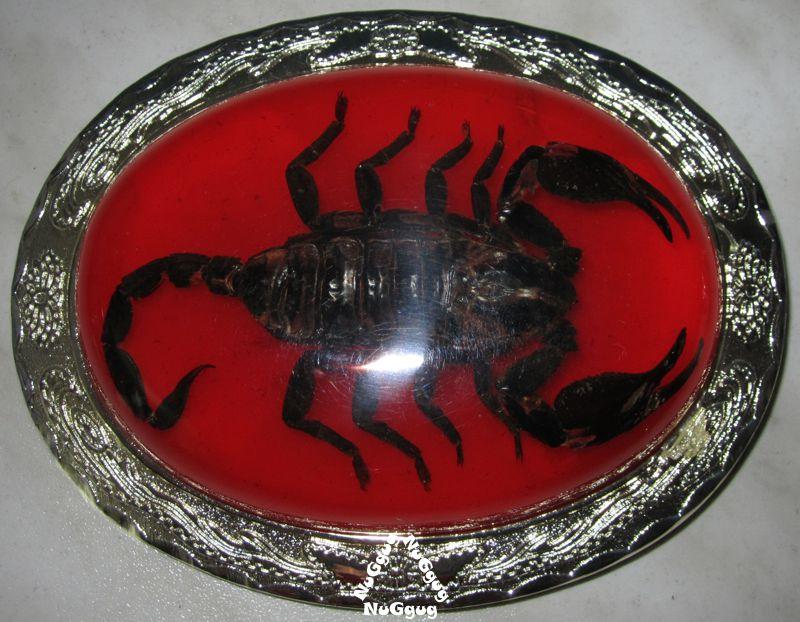 outlet Großhändler Outlet-Verkauf NuGgug - 3D-Gürtelschnalle mit echtem Skorpion. Buckle